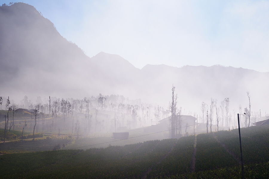 Ranní mlhy v Cemoro Lawang.