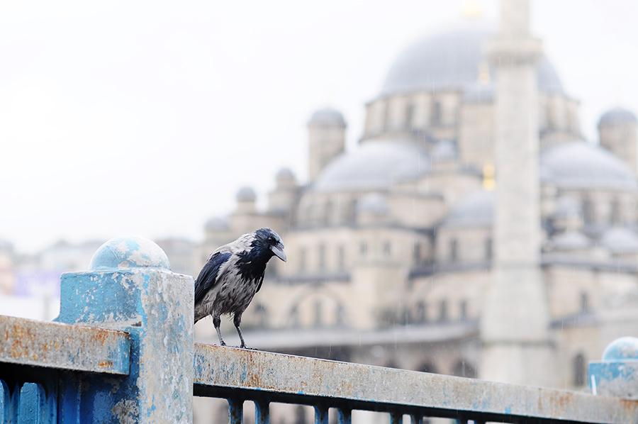 istanbul-turecko-2010-010