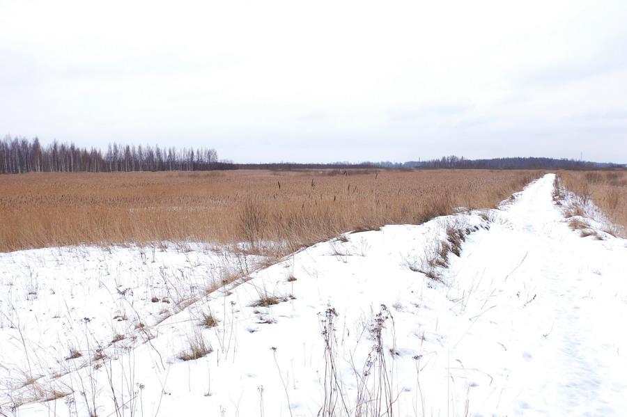 Mokřady: chodí se po hrázích mezi rozlehlými oblastmi zarostlými sakra vysokou travou.