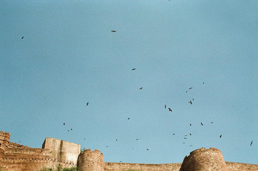 krmení orlů na pevnosti Mehrangarh - Jodhpur, Indie
