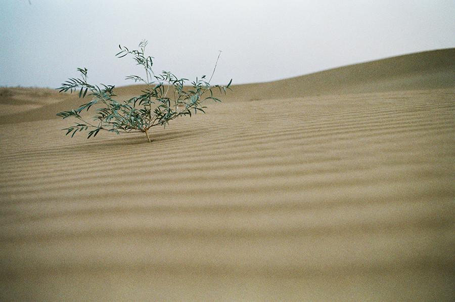 Kdesi v Thárské poušti, Indie