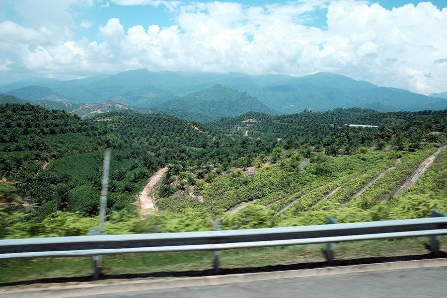 Cestou na Cameron Highlands, Malajsie