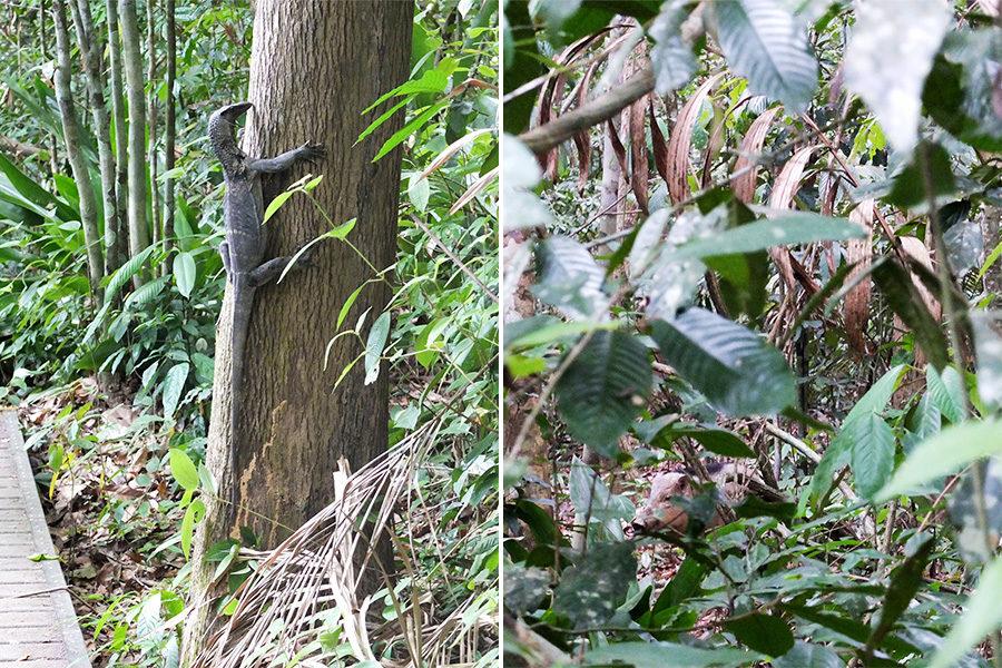 Zvířata v Taman Negara, Malajsie