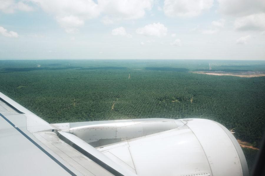 palmové plantáže v Malajsii