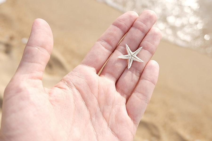 malinkatá hvězdice na malajských ostrovech