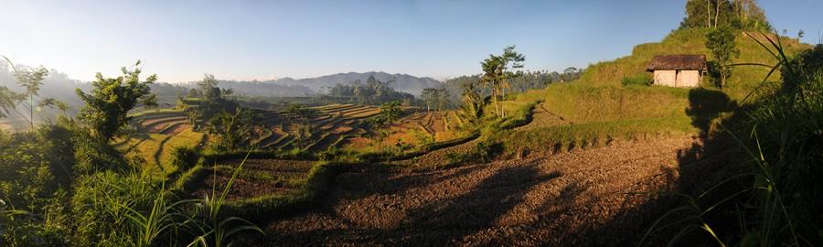 Rýžové terasy na Bali