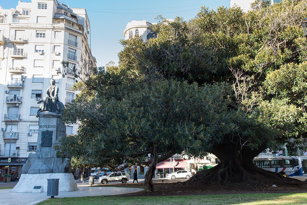 krásný strom v parku vedle sochy perito Francisco Moreno