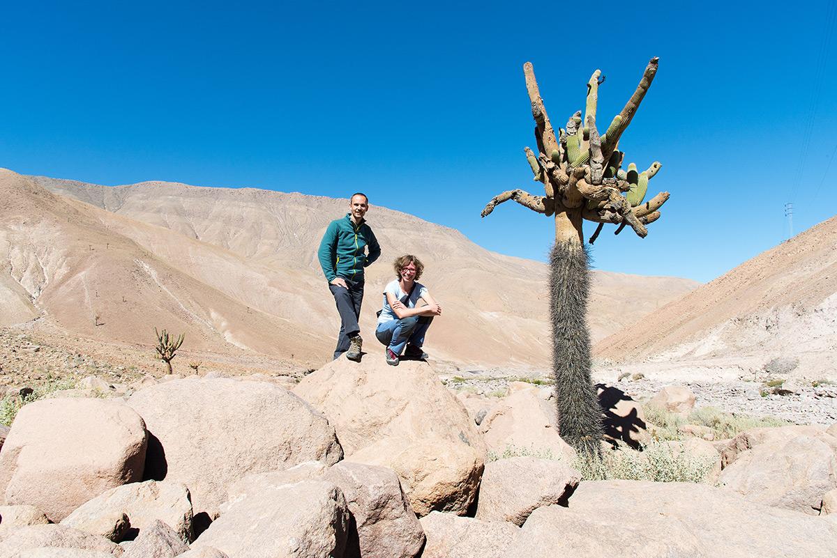 my dva a kaktus