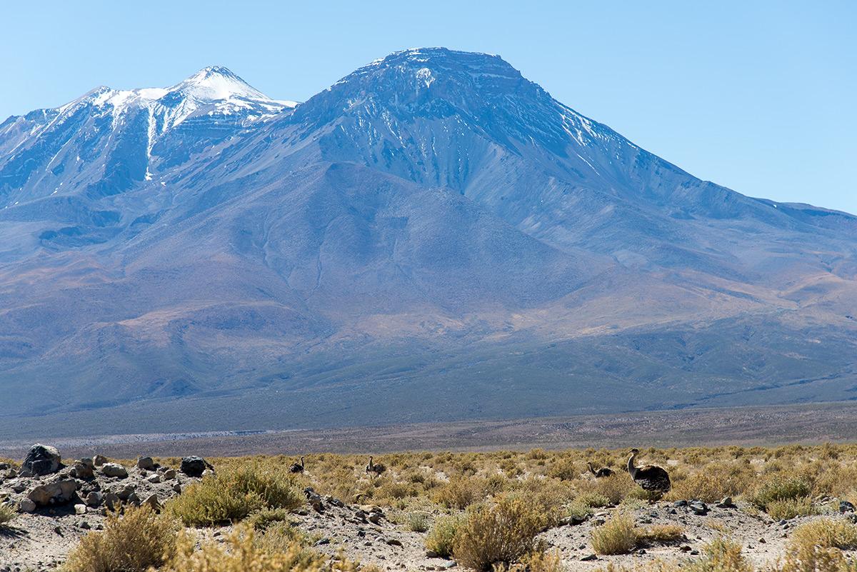 nandu pampový a hory