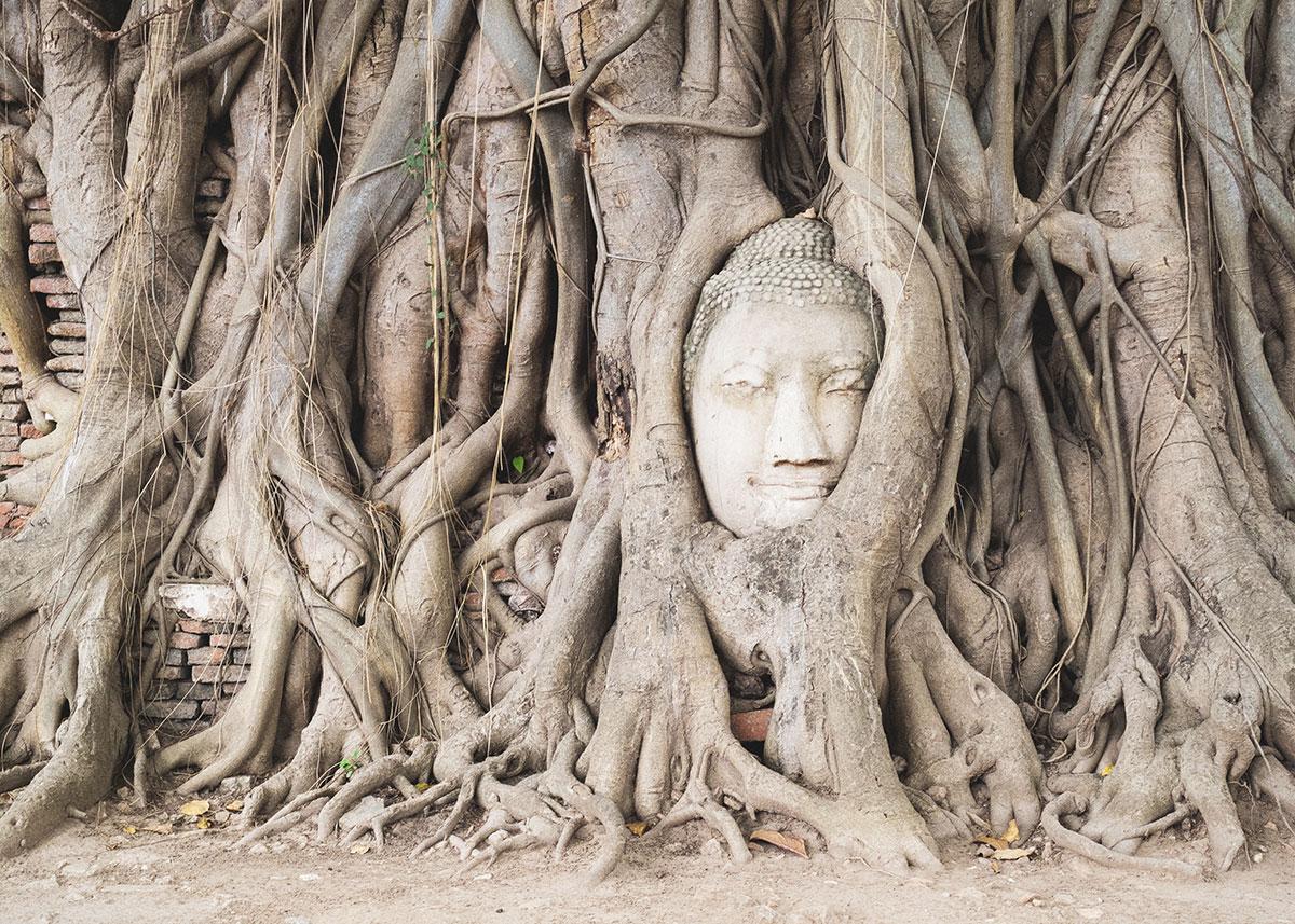 Buddha ve stromě, Ayutthaya, Thajsko