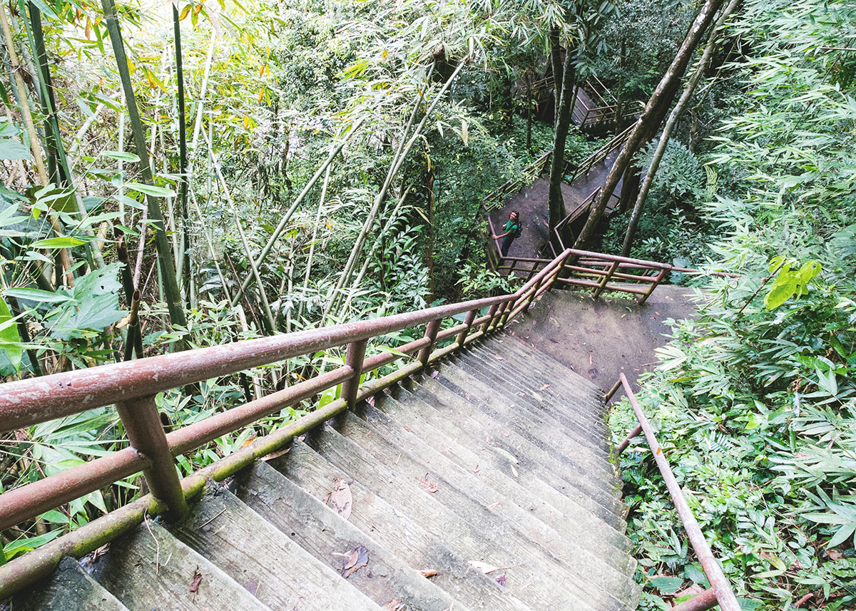 Thajské národní parky, džungle